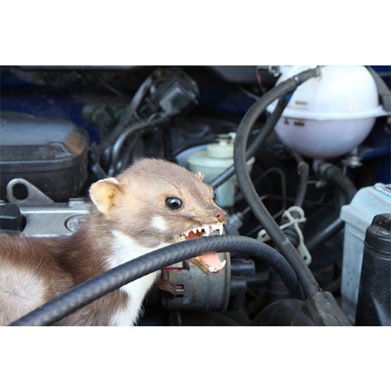 Odstraszacz kun do samochodu TUNAP 398 - kuna
